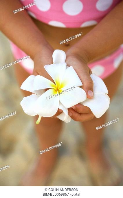 Close up of frangipani flowers in girl's hands at beach