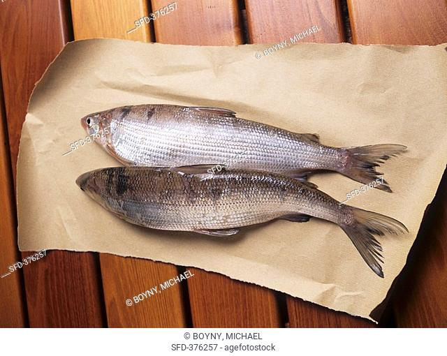 Two fresh whitefish on paper
