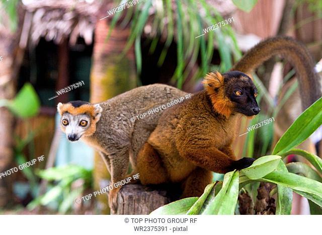 Madagascar wildlife