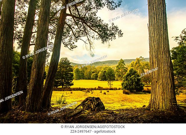Tree trunks frame a vibrant autumn hillside with open meadows and mountains views. Mount Field National Park in the southern region of Tasmania, Australia