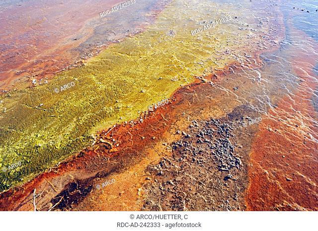 Algal-bacterial mats and mineral deposits at hot spring West Thumb Geyser Basin Yellowstone national park Wyoming USA bacteria algae