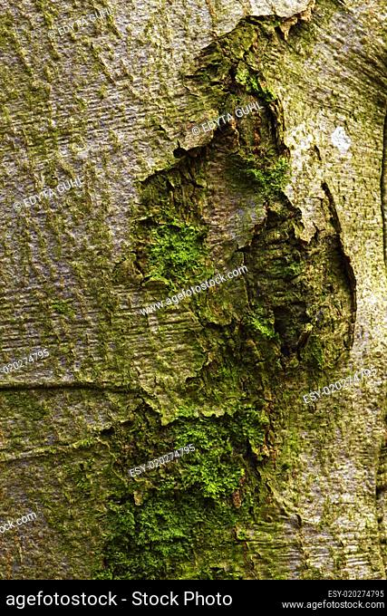 A picture of bark cover in moss