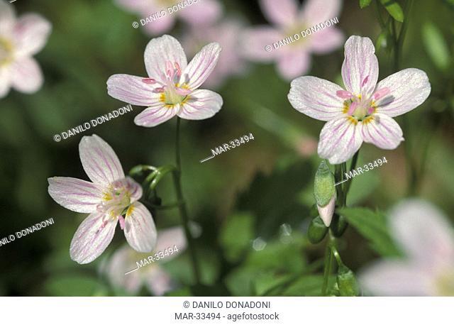 carolina spring flowers, tyler state park, usa