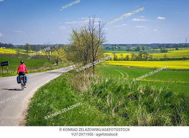 Road among rapeseed fields in West Pomeranian Voivodeship of Poland