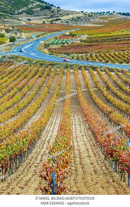 Vineyards in autumn. Cenicero village. La Rioja, Spain, Europe