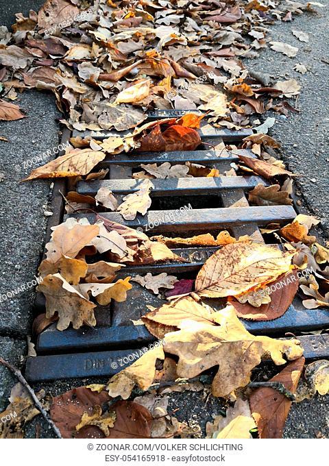 Verstopfter Gullydeckel mit Herbstblättern an einer Straße Clogged manhole cover with autumn leaves on a street