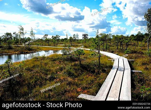 Panoramic view of a walking trail through the bog in Kemeri National Park, Latvia