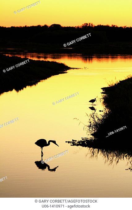 Silouette of wading birds on the Myakka River, Florida, USA at sunset
