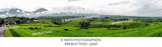 Panoramic view of rural rice paddies, Jatiluwih, Bali, Indonesia
