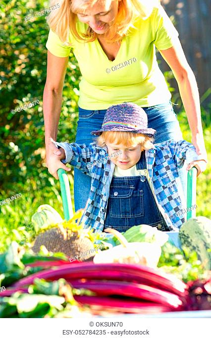 Kid boy and mother in domestic garden. Adorable child standing near the wheelbarrow with vegetables harvest. Healthy organic vegetables for children