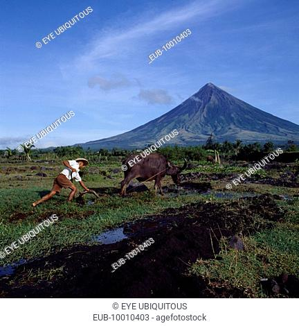 Man ploughing with bullock with the peak of the Mayon volcano behind