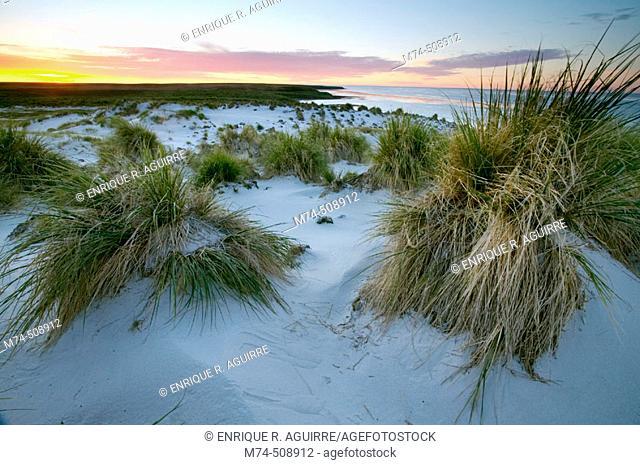 Sunset over beach. Falkland Islands
