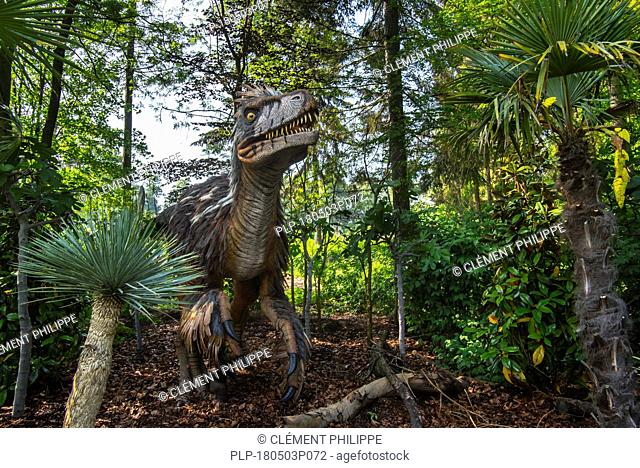 Realistic lifesize replica of Utahraptor ostrommaysorum, theropod dinosaur of the Upper Barremian stage in the early Cretaceous period