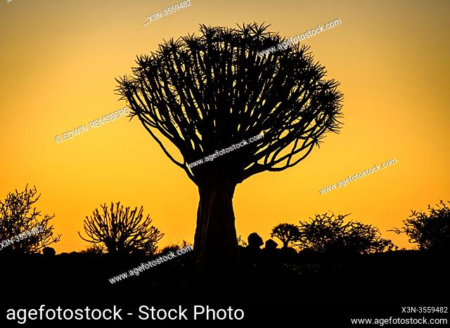 Sunsets behind Quiver Trees at the Quiver Tree Forest - Keetmanshoop Namibia