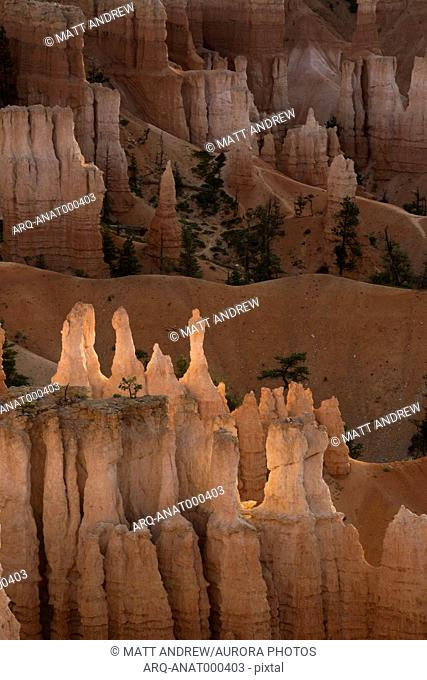 Hoodoos in Bryce Canyon National park glow from the morning sunrise