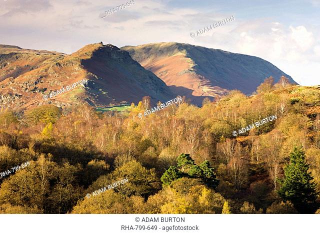 Helm Crag and Steel Fell mountains behind autumnal woodland, Grasmere, Lake District National Park, Cumbria, England, United Kingdom, Europe