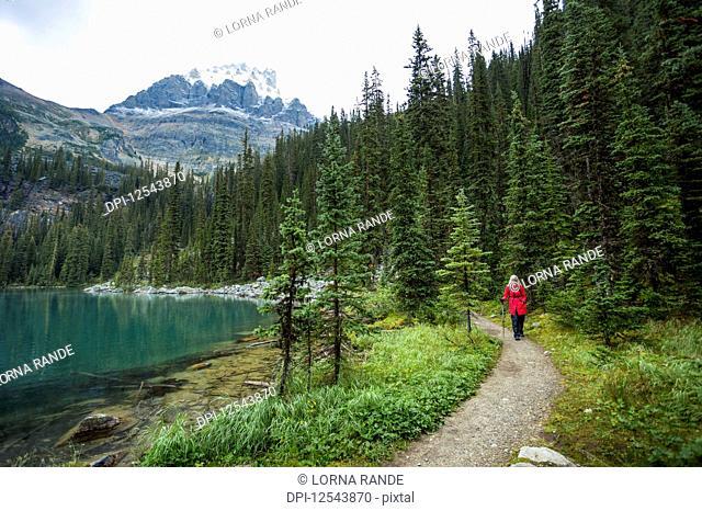 Female hiker at Lake Oesa and Lake O'Hara, Yoho National Park; British Columbia, Canada