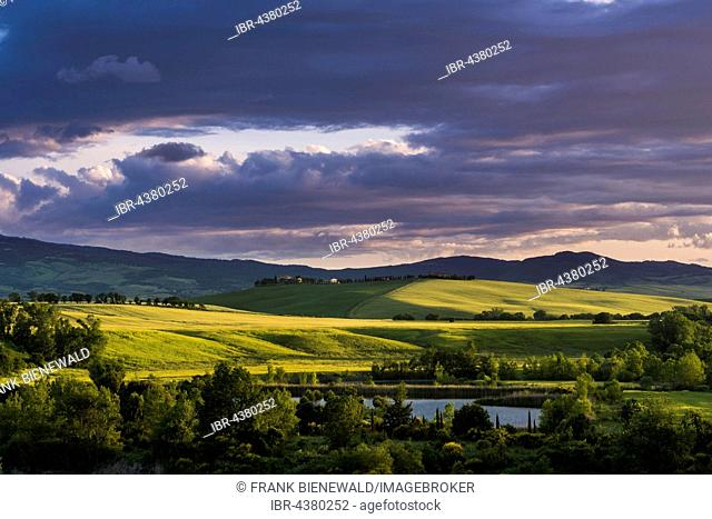 Typical green Tuscan landscape in Val d'Orcia with hills, a lake, trees, fields and Monte Amiata in the distance at sunset, Spedaletto, Tuscany, Italy