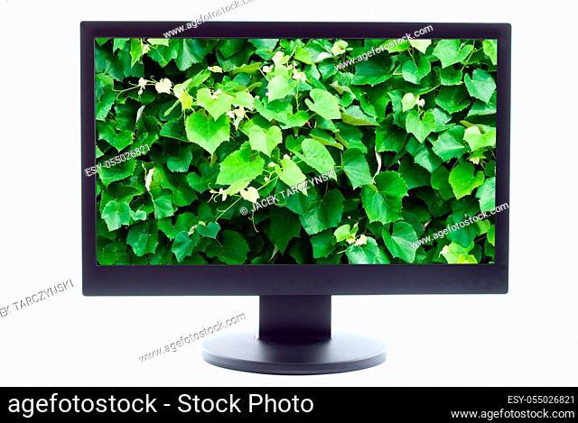 green plant on TV screen
