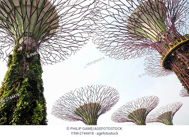 Supertrees at the Gardens by the Bay nature park, Singapore