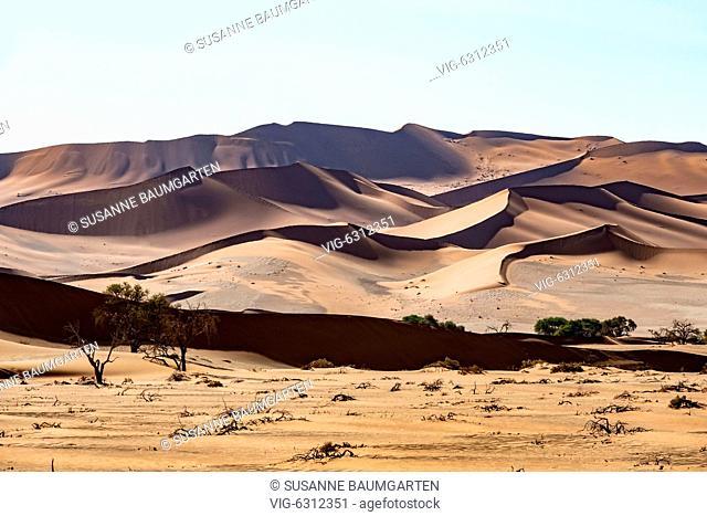 NAMIBIA, SOSSUSVLEI, Died Camel thorns in front of a star dune. - SOSSUSVLEI, NAMIB, Namibia, 07/01/2018