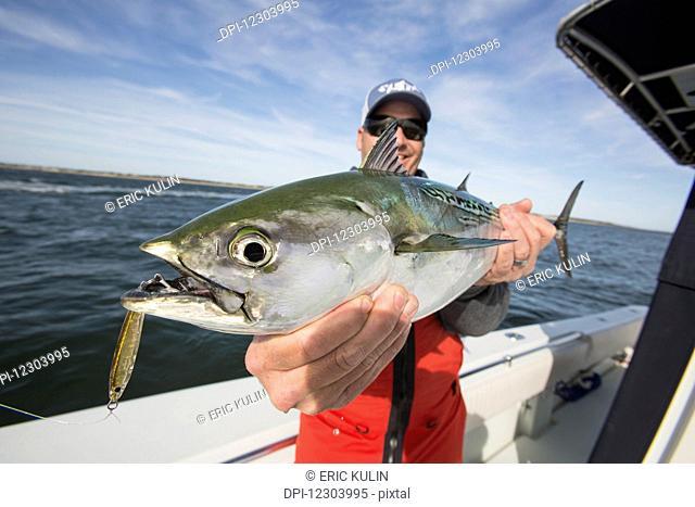 Fishing for false albacore tuna off the coast of Cape Cod; Massachusetts, United States of America