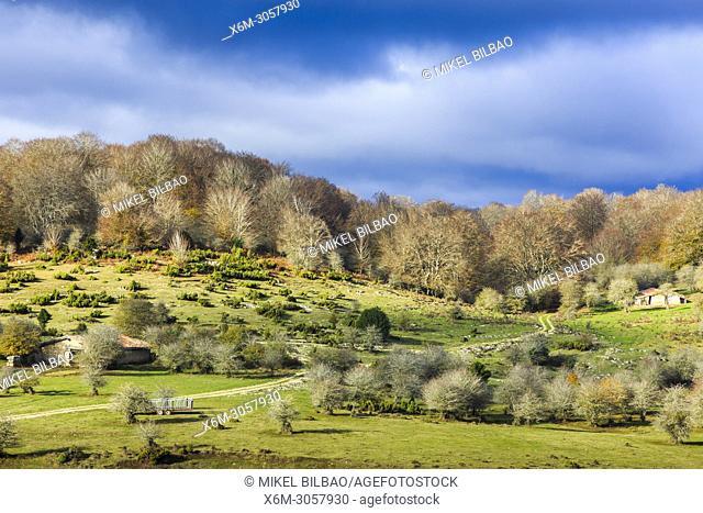 Beechwood and pastures. Sierra de Urbasa-Andia Natural Park. Navarre, Spain, Europe