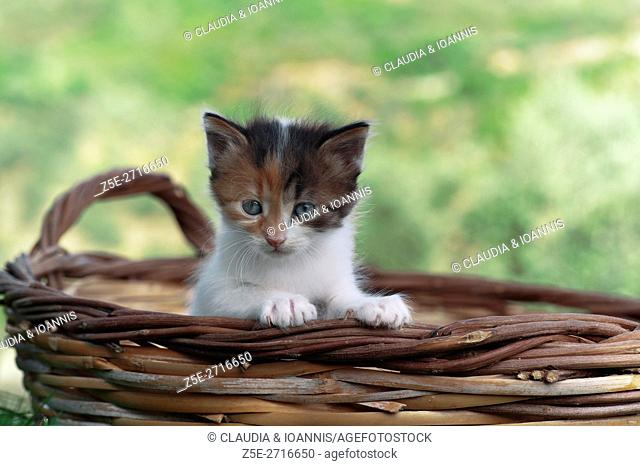 Kitten sitting in a basket outdoors