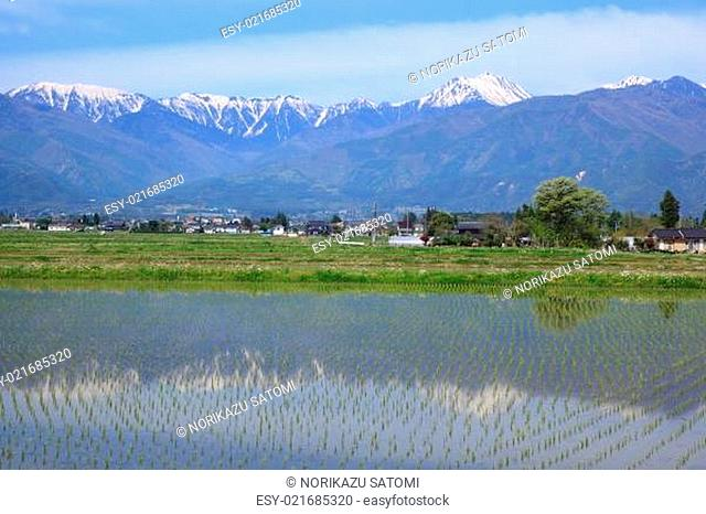 Japan Alps and paddy field