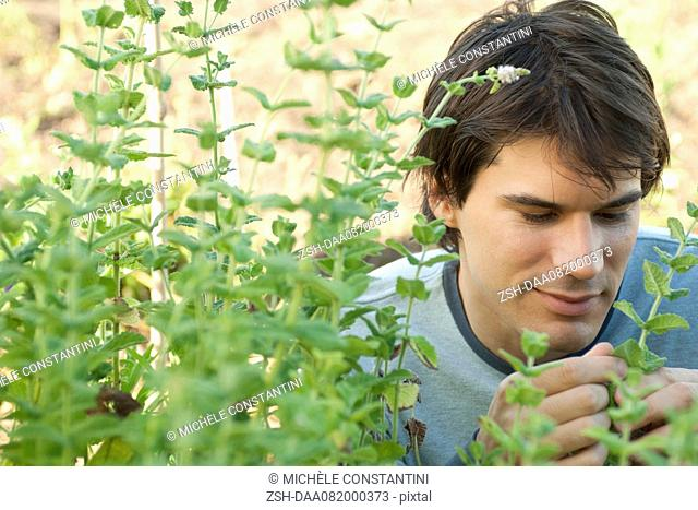 Mid-adult man looking at mint plants