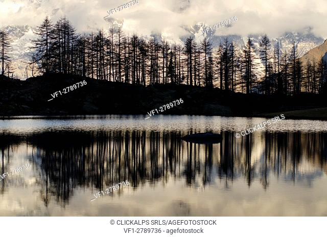 Silhouette of larches on the lake (Arpy Lake, Vallée d'Aoste, Italy)