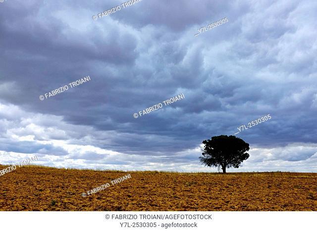 Tree in an empty field on the Way of Saint James (Camino de Santiago) on the Carretera Boadilla del Camino - Itero de la Vega, Castile and León, Spain