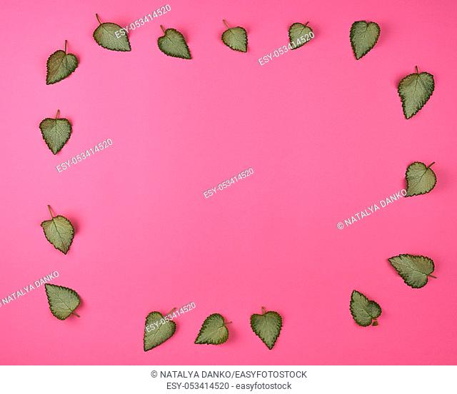 fresh green leaves on a pink background are laid out on the perimeter, empty space in the middle