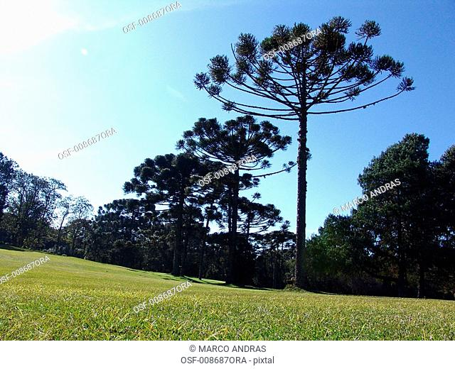 golf field green grass for practice