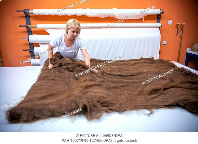 09 July 2019, Brandenburg, Walsleben: Elena Kalganowa lays out a combed alpaca fleece and prepares the wool for filling a duvet