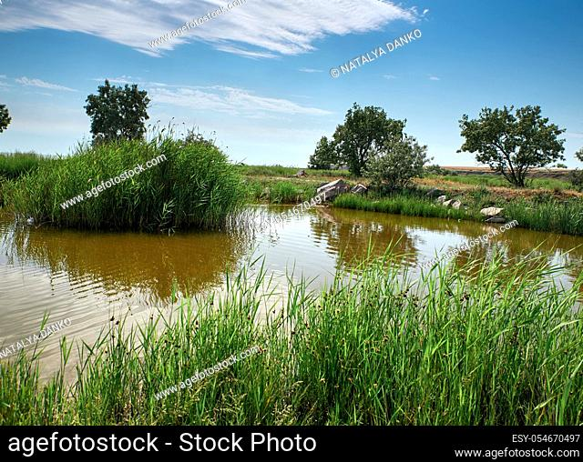 view of the pond with green reeds, summer day. Ukraine
