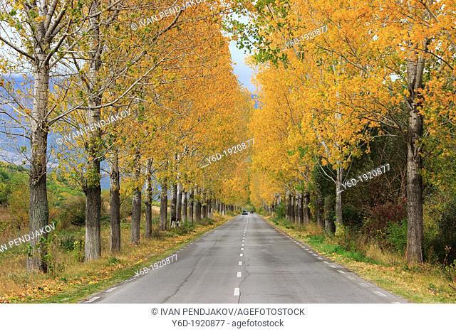 Autumn Road, Bulgaria