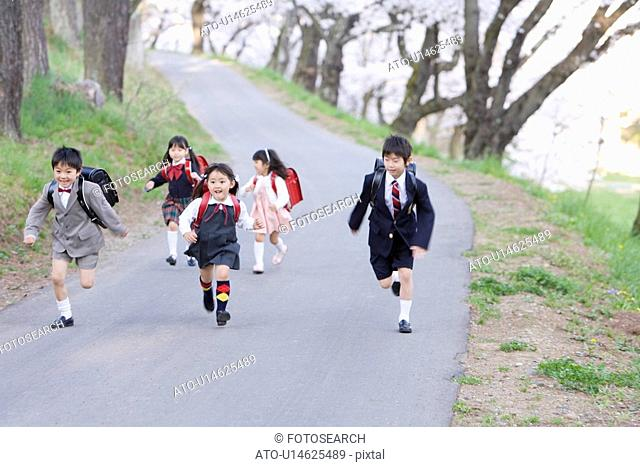 New Student Walking Under Cherry Blossoms