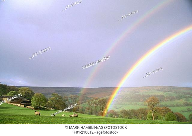Rainbow over Stanage Edge. Sheep in meadow. Peak District National Park