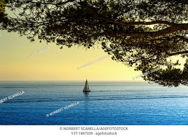 Europe, France, Bouche-du-Rhone, Cassis. Cape Canaille. Sailboat at sunset