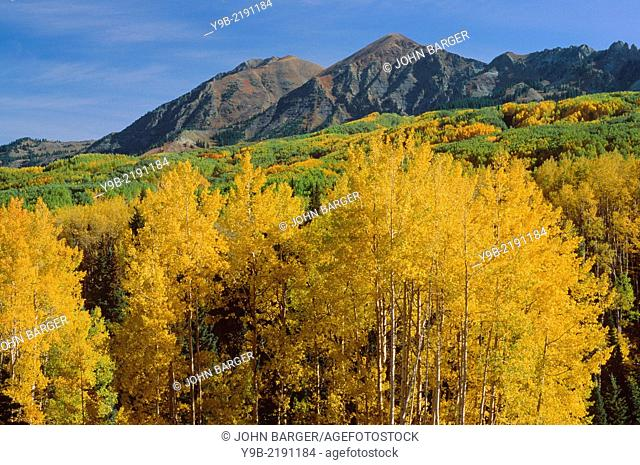 Autumn colored aspen and the Ruby Range, Gunnison National Forest, Colorado, USA