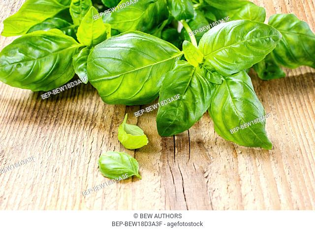 Basil leaves isolated on wooden background