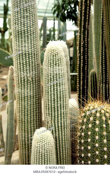 Cactus, plants, flora, exhibition