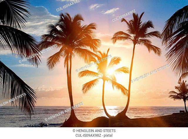 Silhouetted palm tree's at sunset on beach, Dominican Republic, The Caribbean