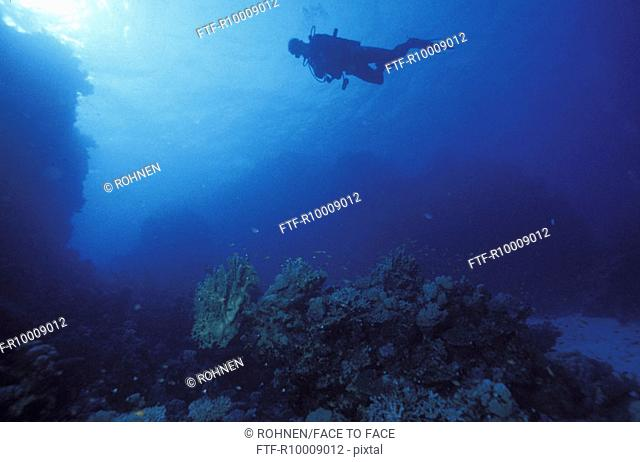 Diver in corals landscape, Egypt, Hmata, red sea