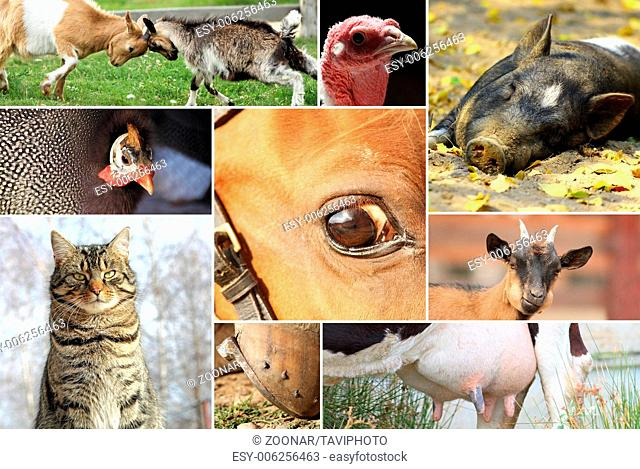 collage with pictures of farm animals forming a co