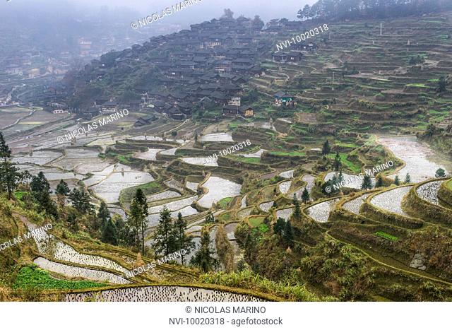Rice terraces of XiJiang, traditional village of the indigenous ethnic group of the Miao, Guizhou Province, China