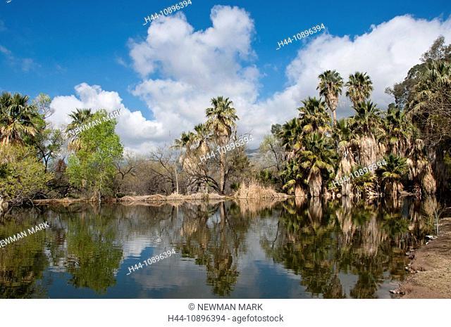 Agua Caliente Park, Tucson, Arizona, March, trees, USA, North America, America, nature, landscape, lake