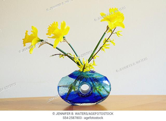 Daffodils and Forsythia in a blue vase