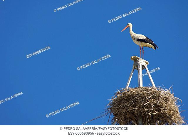 Stork in a high tension tower